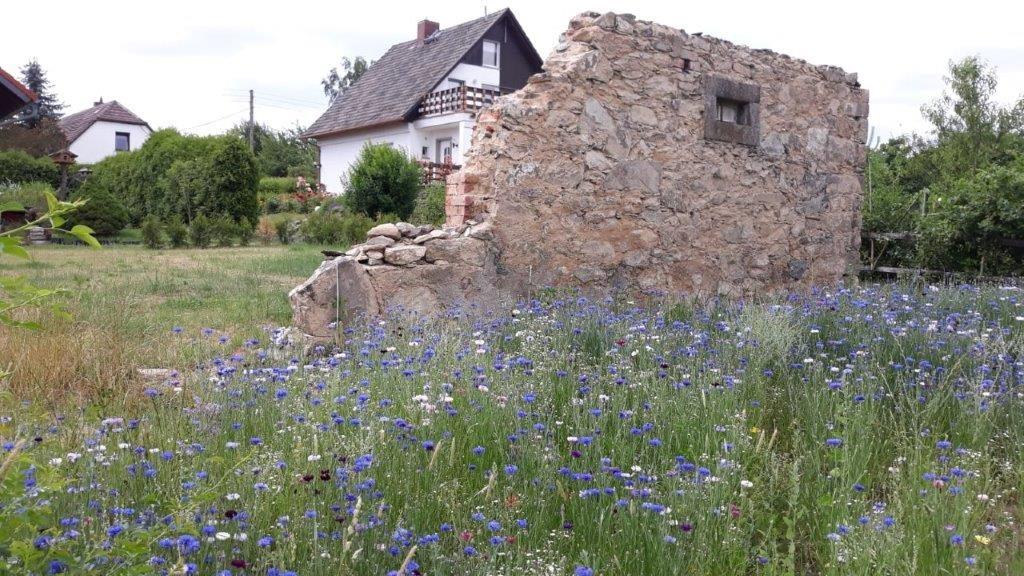 Pritzkow-Blumenwiese