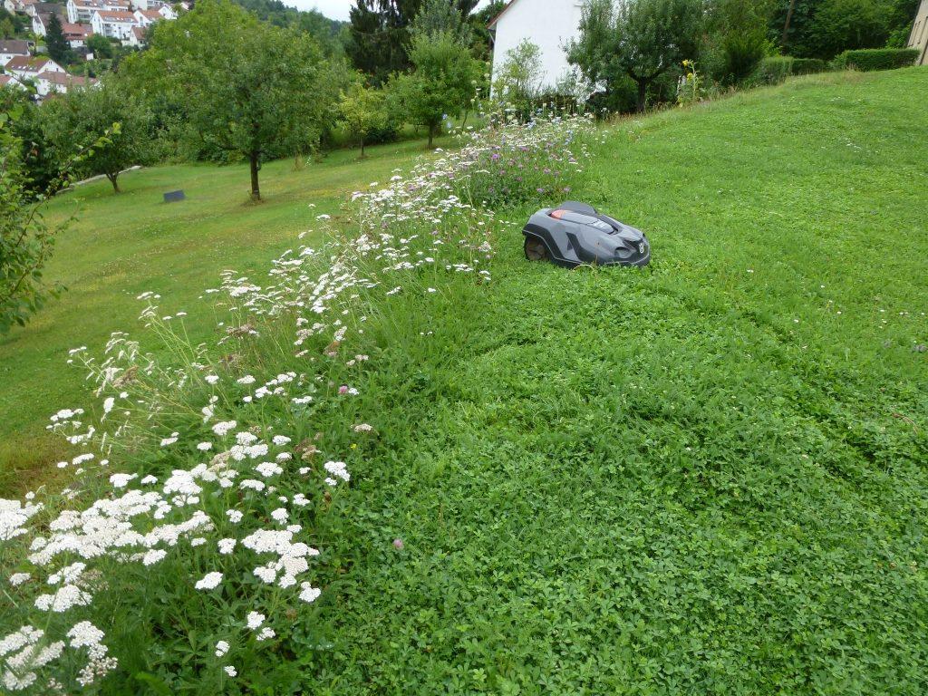 Scharpf-Blumenwiese