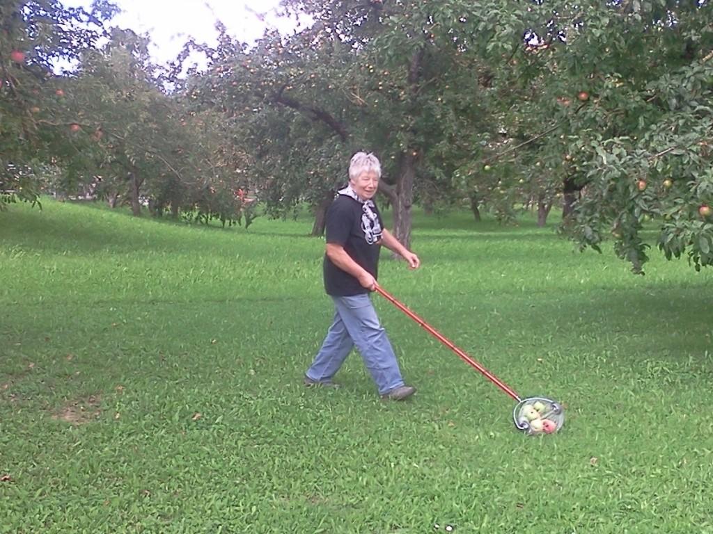 Apfelsammler im Einsatz