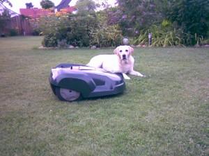 Automower mit Hund