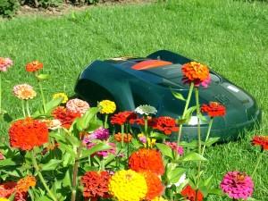 Automower Blumen