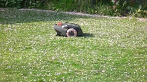 dr.becker-automower-kirschblüten