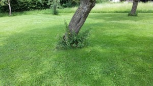 Akku-Trimmer-Baum-vorher