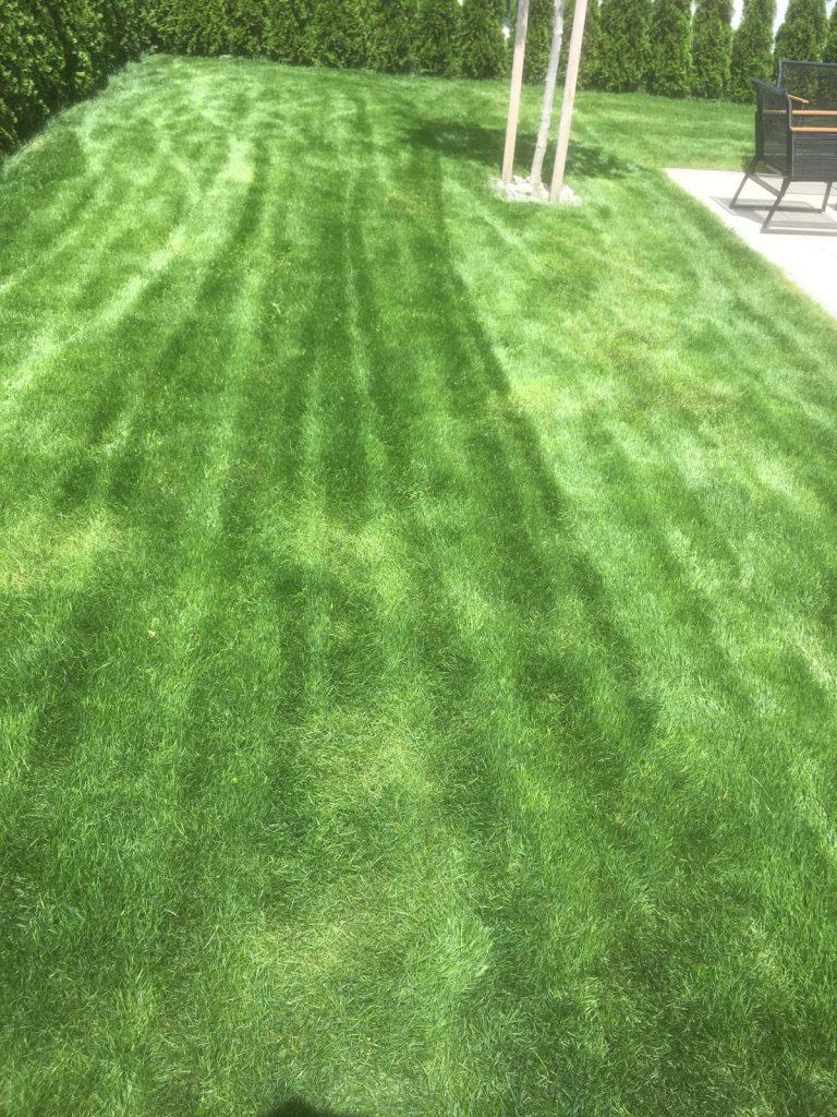 Rasen nach der Reparatur