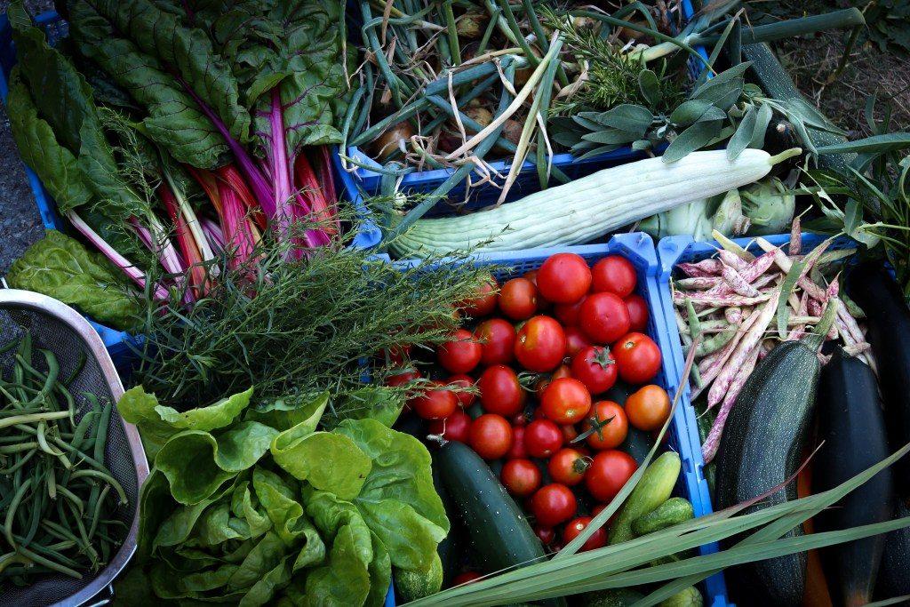 biotopica-farm-gemuese