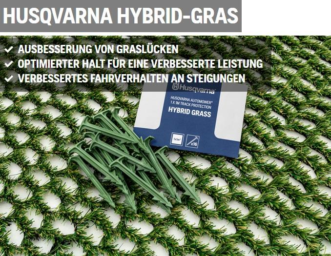 hybridgras